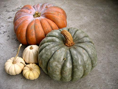 Wilson Farm Pumpkins