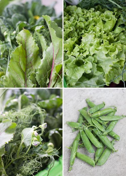 Farmer Dave's CSA 2011, Week 1